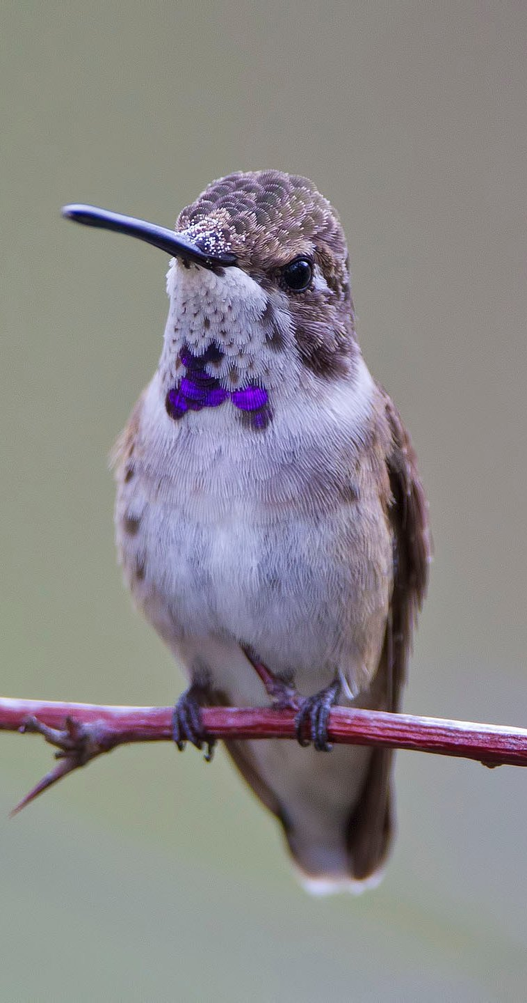 A hummingbird up close.