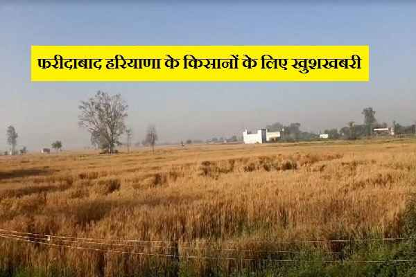 faridabad-haryana-farmer-good-news-no-ban-on-crop-harvesting
