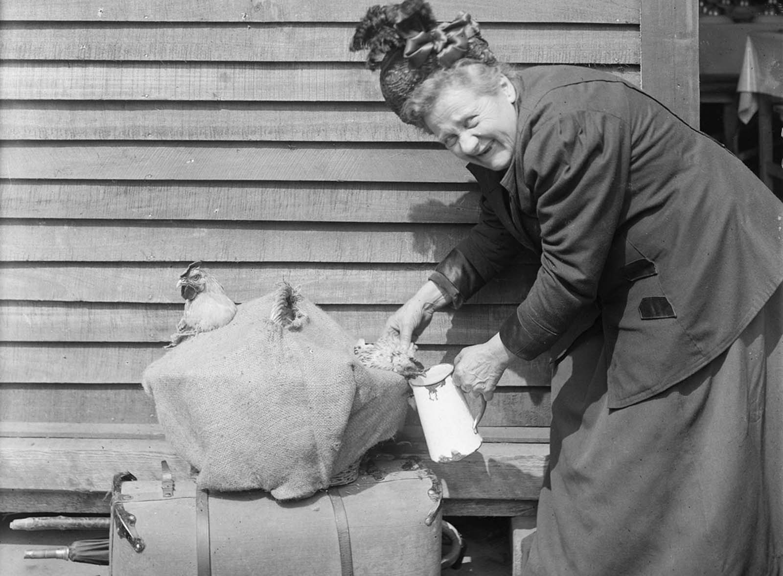 This French woman, forced by the Germans to leave her home, was able to save only a suitcase full of clothes and her two pet roosters, which she is happily feeding in front of the American Red Cross Refugee Hut at the Gare du Nord, Paris, on June 27, 1918.