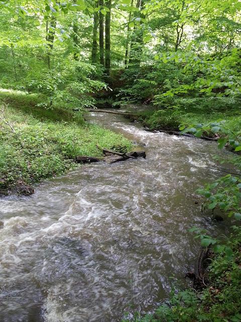 Der Lachsbach schlängelt sich durch den Wald