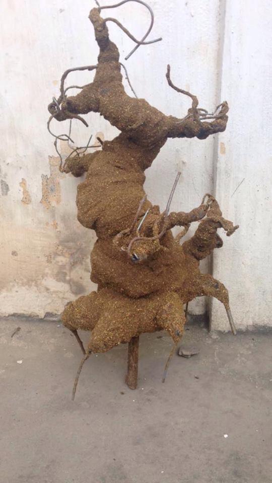 Goc bonsai mai dao tai Dong Tac