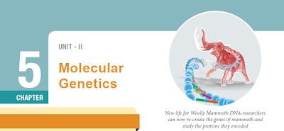 CLASS 12 BIOLOGY ZOOLOGY - CHAPTER 5 MOLECULAR GENETICS - 1 MARK QUESTIONS - ONLINE TEST