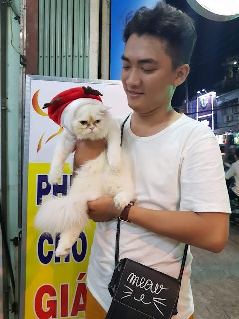 Mèo Porn và Noel