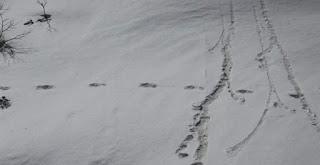 Η Ινδία δημοσιοποίησε «ίχνη» από το Γέτι το χιονάνθρωπο των Ιμαλαΐων (φωτό)