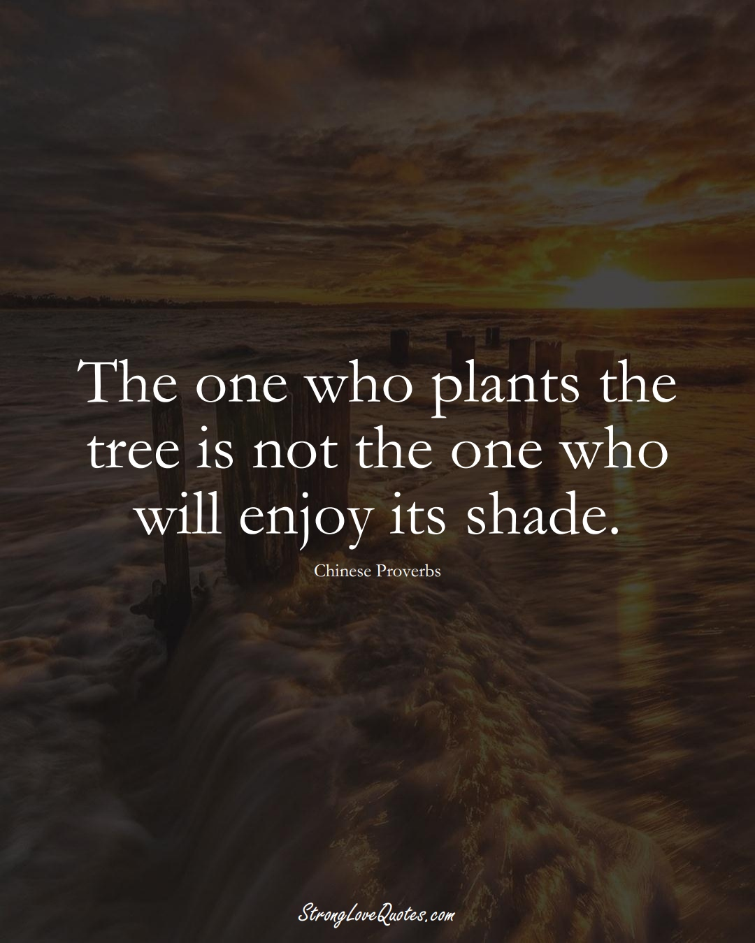The one who plants the tree is not the one who will enjoy its shade. (Chinese Sayings);  #AsianSayings