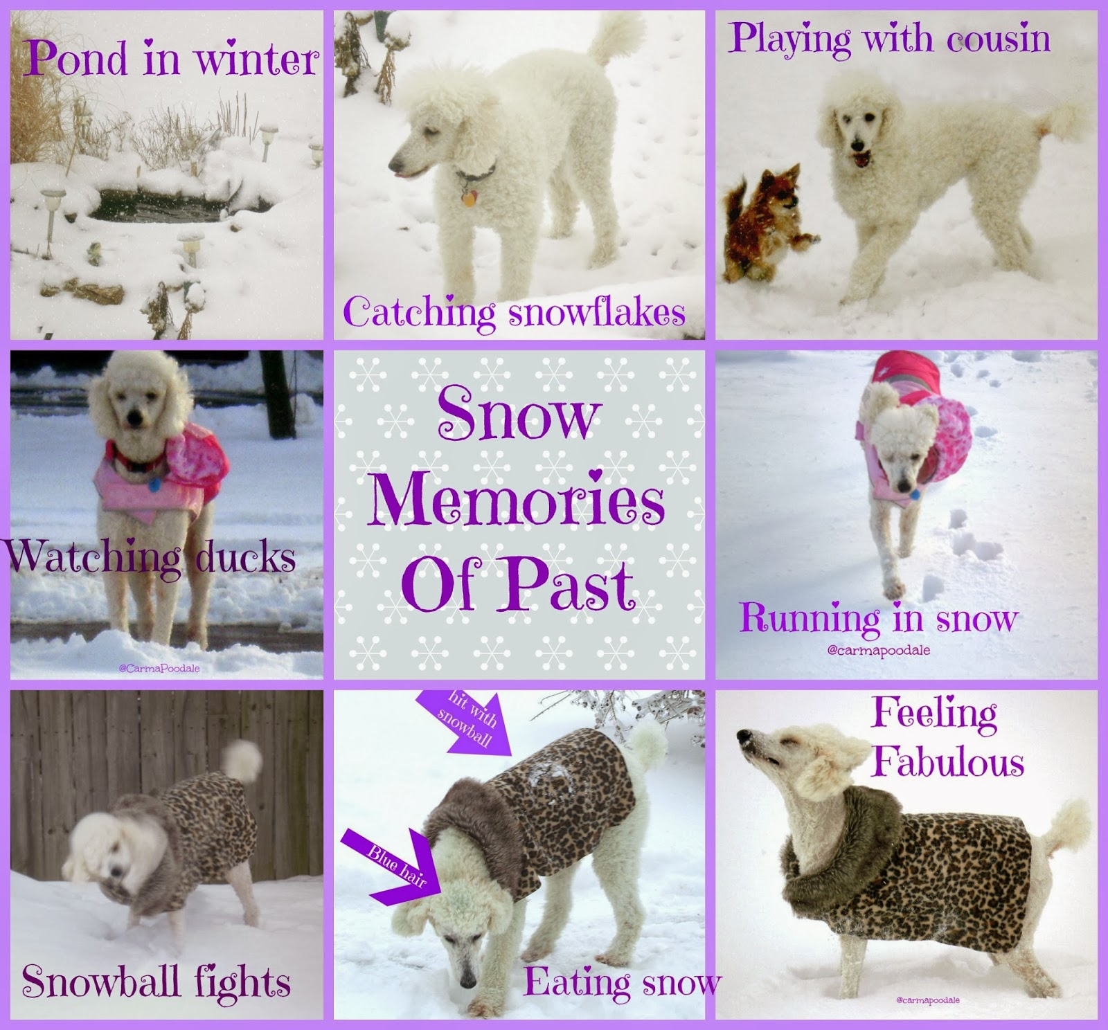 photos of dog in snow