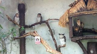Kuala Lumpur Bird Park, Kuala Lumpur, Malaysia