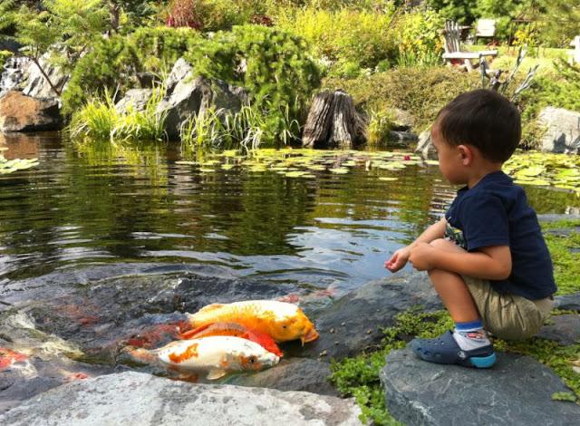 12 Jenis Ikan yang Cocok Dipelihara di Kolam