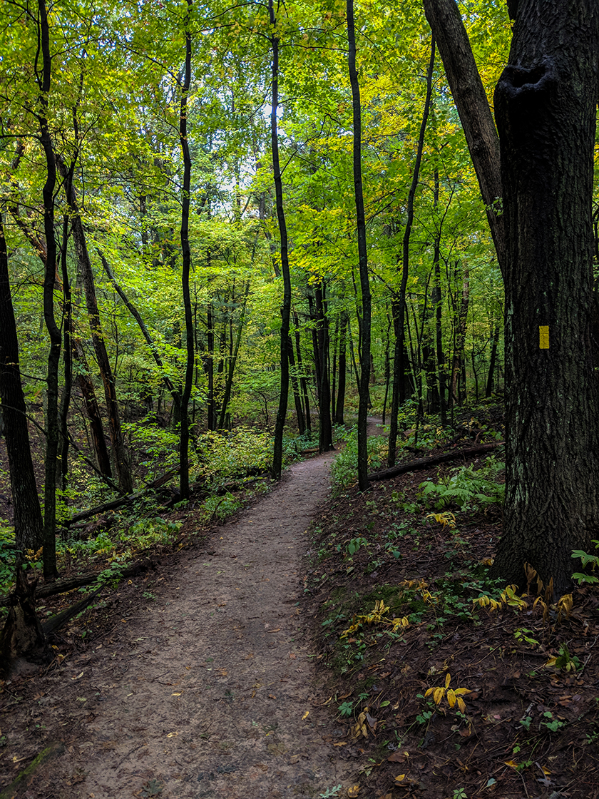 wet environment trail cutting through deciduous trees