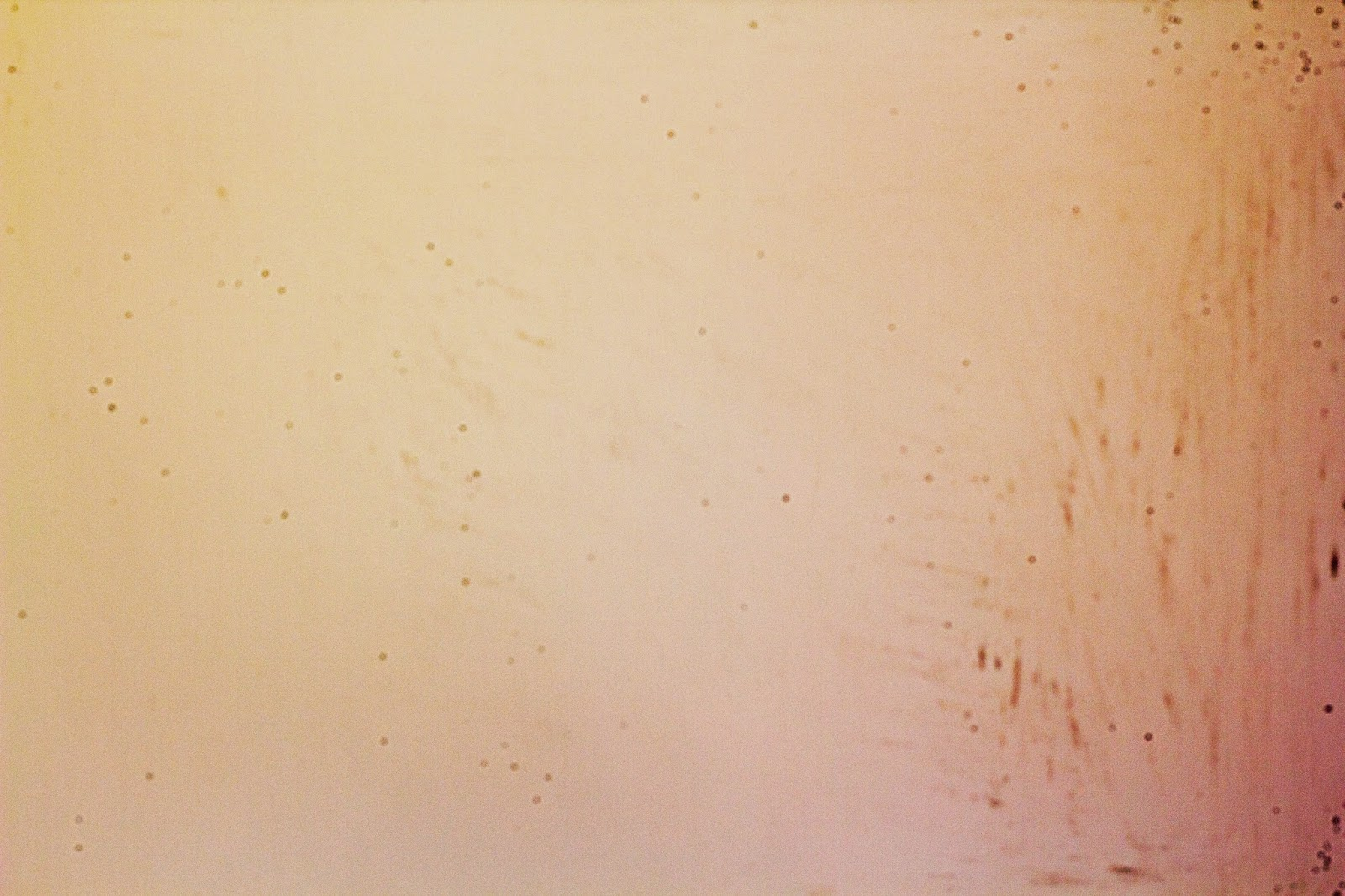 Test image with visible sensor dust and traces of sensor cleaning liquid