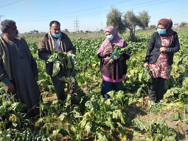 زراعة الفيوم استمرار المتابعة الحقلية على الزراعات الشتوية للاطمئنان على الحاله العامة