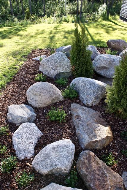 puutarha, lehtikuusi, tuija, kääpiövuorimänty, lilja, norjanangervo, kataja, kate, zicoshome, zicos.fi, zicos, house doctor, ruukku