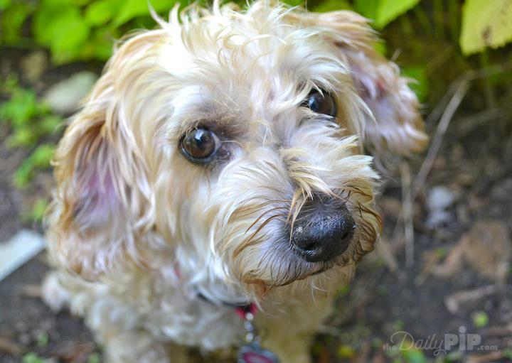 Adopting a court case dog