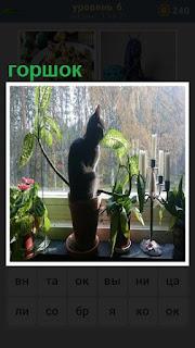 Около окна на подоконнике на горшке сидит кошка и рядом цветы
