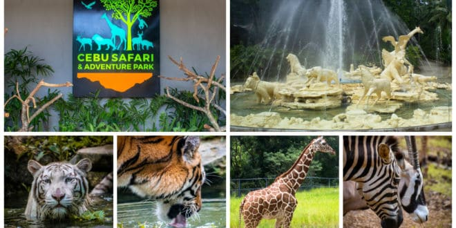 Try to visit the Adventure in the Wild (Cebu Safari and Adventure Park)