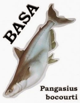 basa fish pangasius bocourti picture