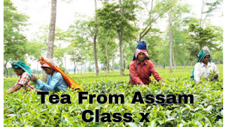 NCERT Class 10 English Glimpses of India : Tea from Assam Questions and Answers