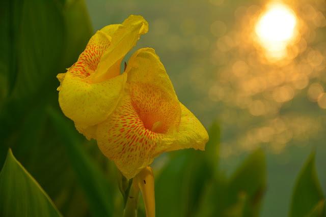Dark yellow Flower image