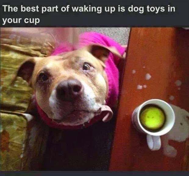 Funny Waking Up To Dog Toys Joke Picture