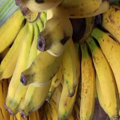 Umpan pisang untuk mancing ikan di sungai memang jarang di gunakan, tapi untuk yang sudah tau kejituan pisang sebagai umpan, bisa di pastikan pemancing itu tidak akan beralih ke umpan yang lainya. Termasuk kalian, bila sudah merasakan tarikan ikan pakai umpan pisang ini maka bisa di pastikan kalian akan terus mengunakan umpan ini saat mancing.