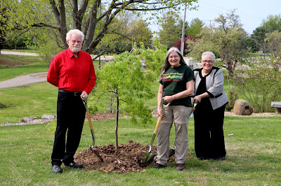 UIS植物在校园里的1,000名捐赠的日本枫树中的第一名