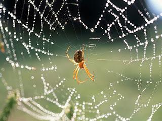 Resultado de imagem para estrategia da aranha
