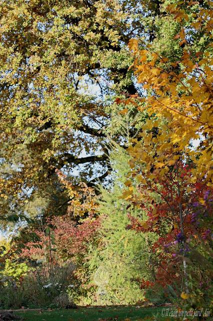 couleurs automne au jardin