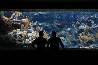 4 Jenis Ikan Louhan Ini Sangat Cocok untuk Jadi Penghuni Aquarium Kamu
