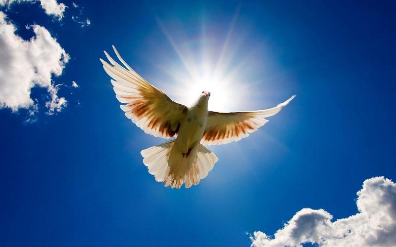 Um Estudo do Espírito Santo (1)