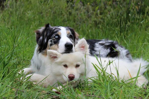 ηλικια εκπαιδευσης σκυλων