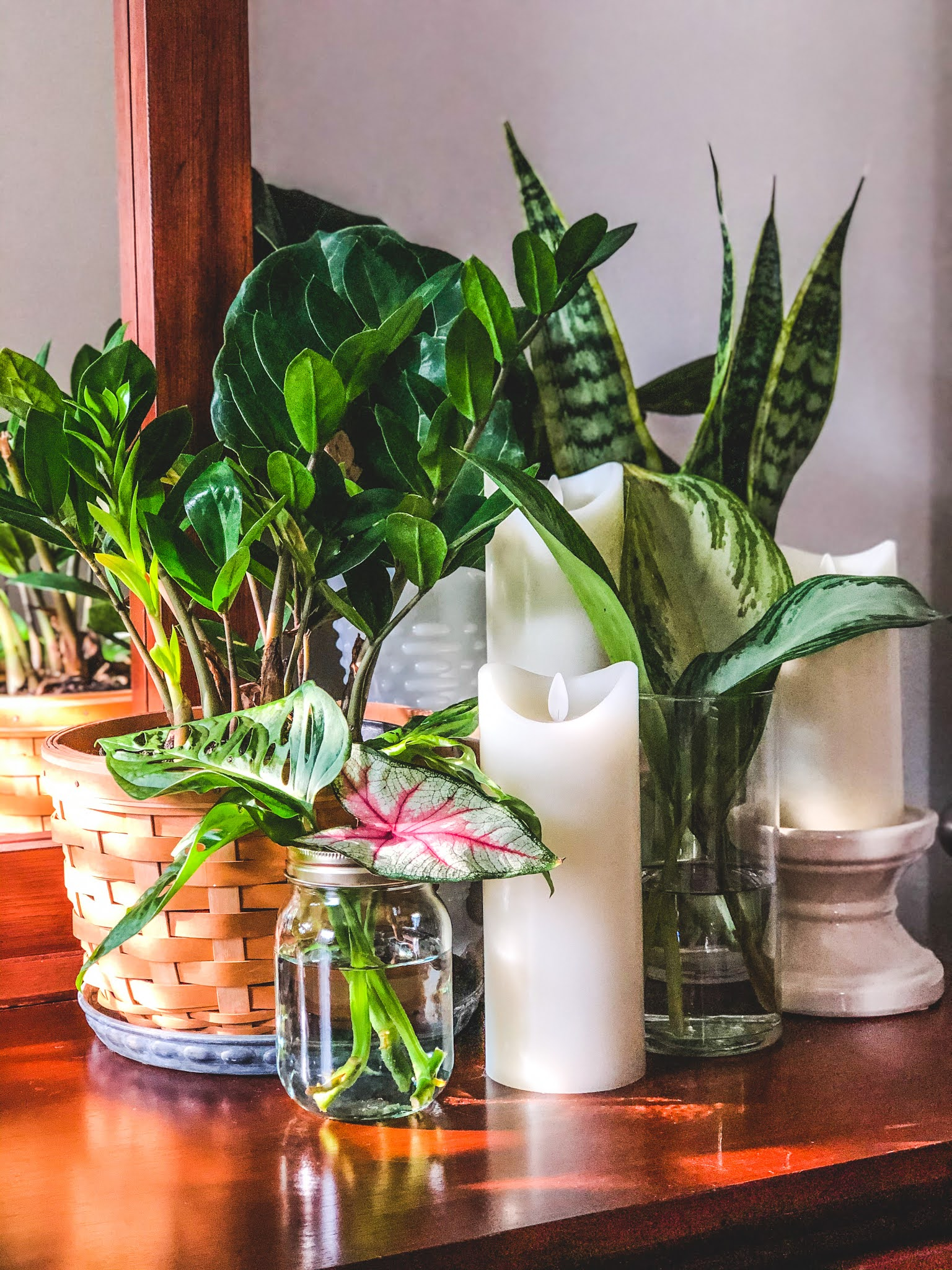 How to propagate plants at home