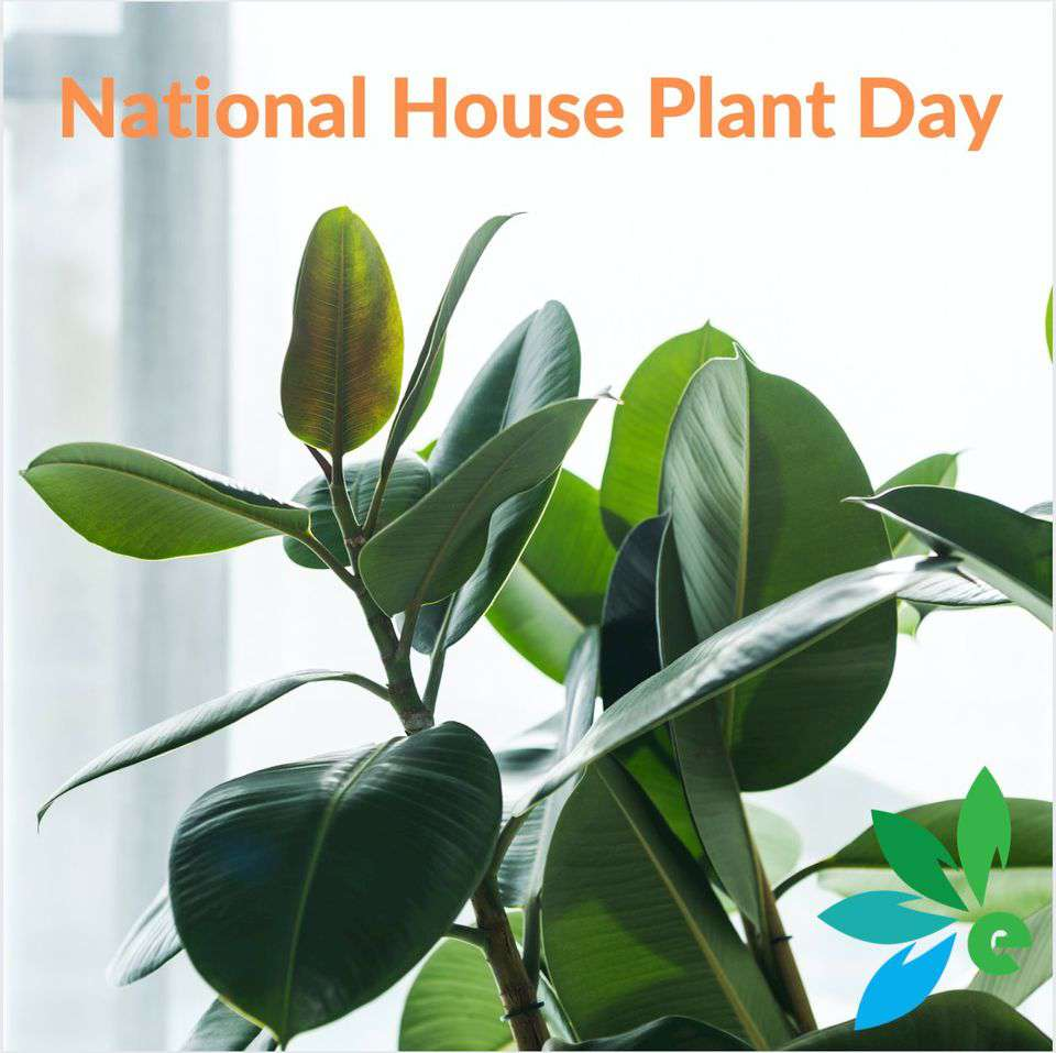 National Houseplant Appreciation Day Wishes pics free download