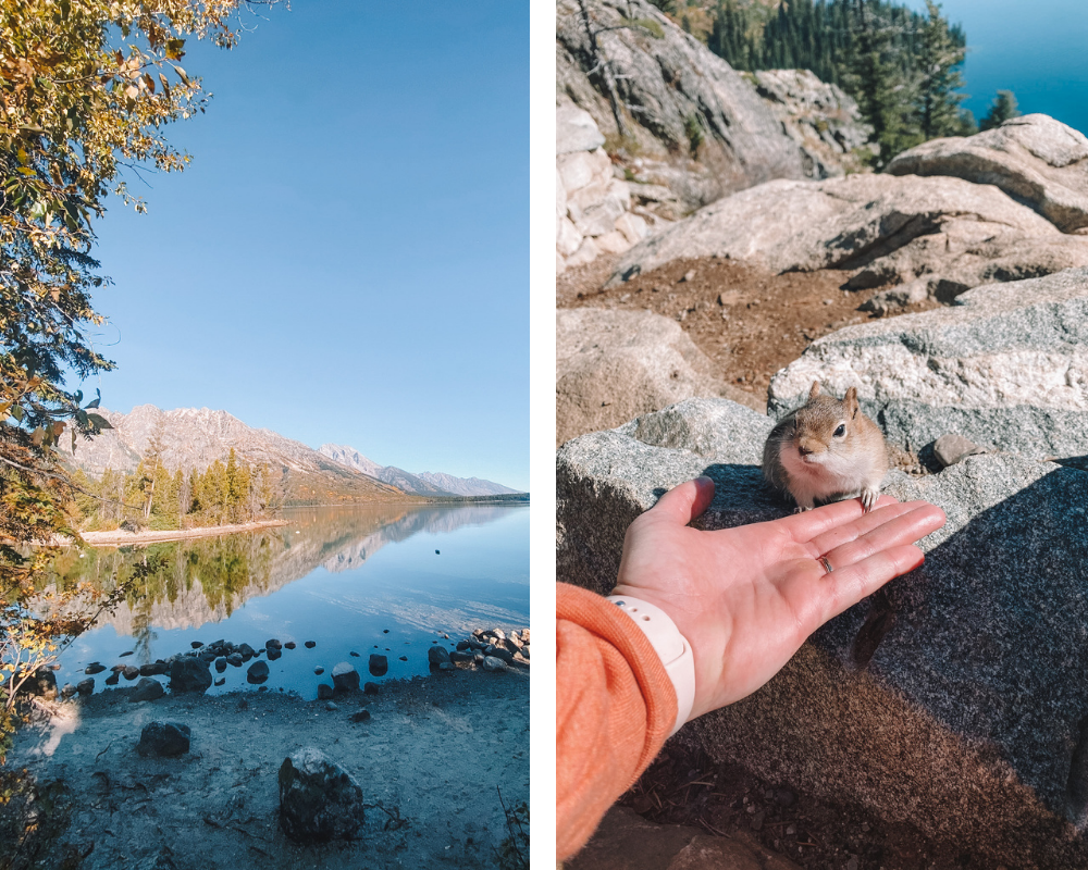 Travel blogger Amanda Martin of Amanda's OK Blog hikes around Jenny Lake in Jackson, Wyoming, and befriends a chipmunk