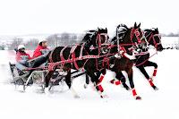 Kar üzerinde üç siyah at ile çekilen büyük bir kızaktan oluşan troyka