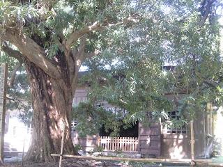 浄光明寺マキ