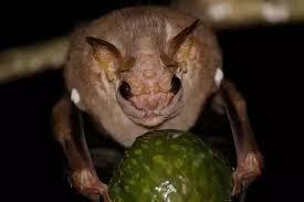 5 अजीब और छिपे हुए जीवों के बारे में यह खास बात ,जानकर उड़ जाएंगे आपके होश