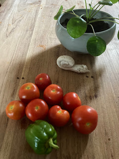 vleestomaat moestuin groene paprika