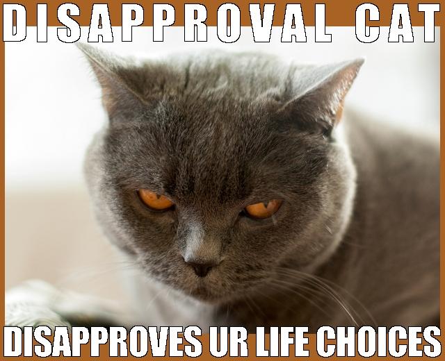 cat disproves