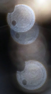 complex paranormal pattern