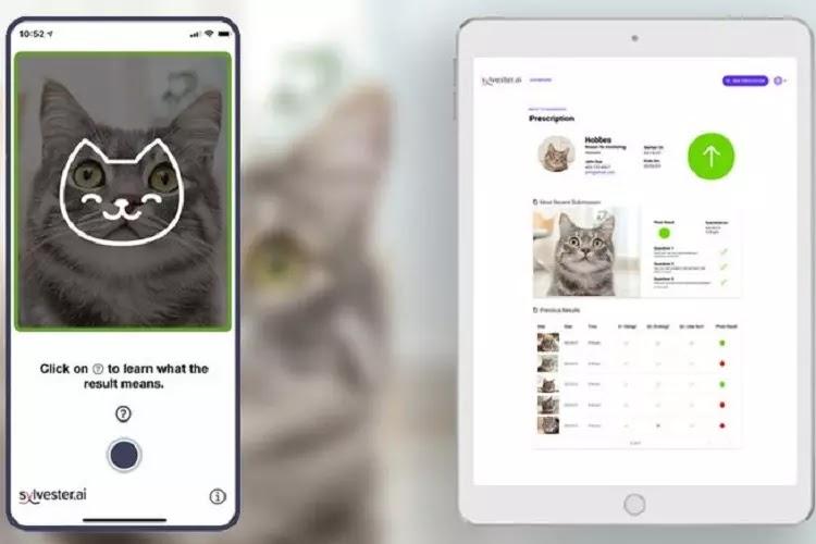 Tably, Aplikasi yang Bisa Baca Perasaan Kucing Bahagia Atau Tidak