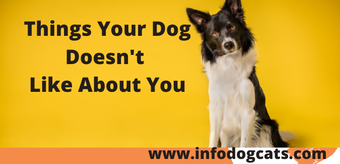 Things Your Dog Doesn't Like About You
