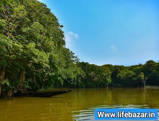 सुंदरवन का परिचय । Sundarban National Park Facts in Hindi