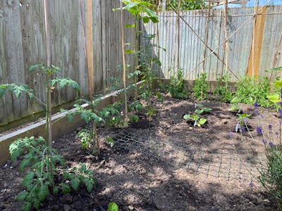 Vegetable patch with tomatoes and sweet peas