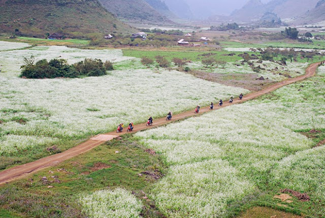 Get lost with the beautiful flower roads in Vietnam
