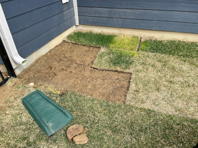 removing squares of new sod showing dirt underneath