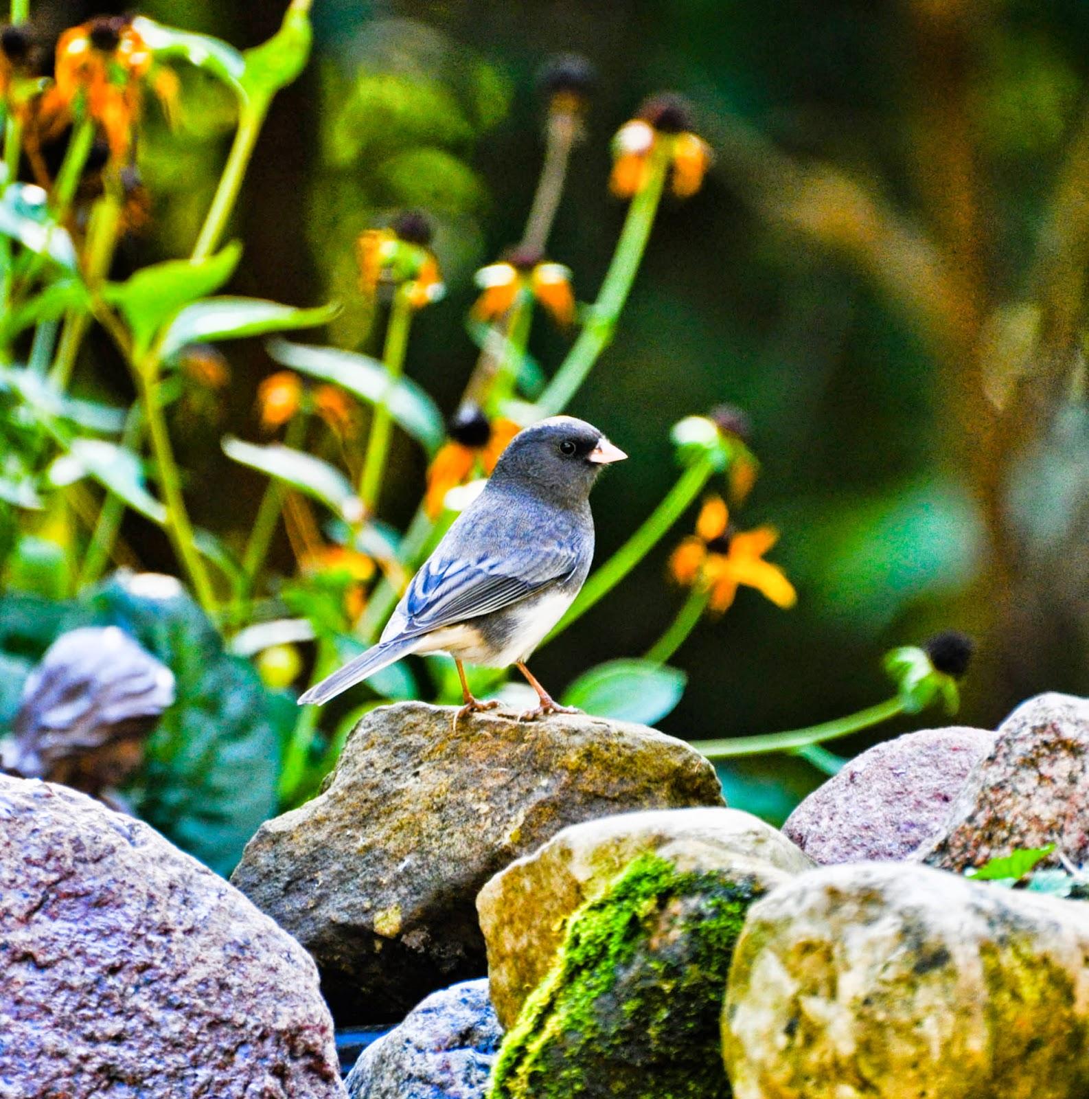 Full HD Birds Wallpapers Birds In
