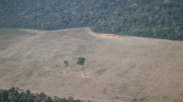 Governo autoriza uso da Força Nacional contra o desmatamento na Amazônia