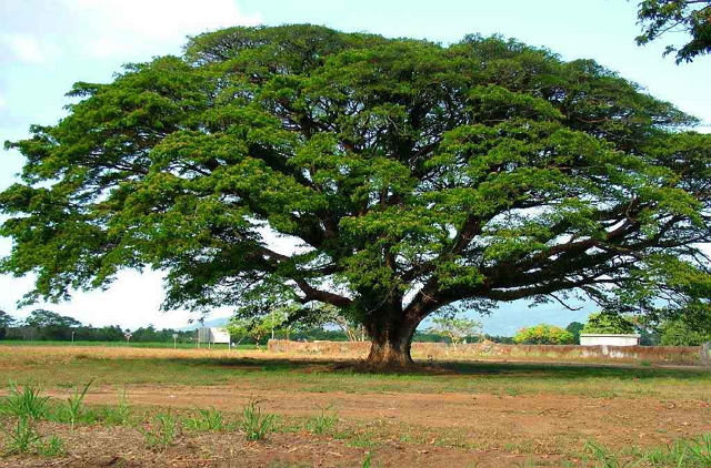 menyelamatkan-keluarga-pohon