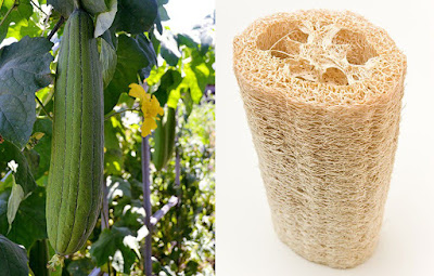 Plastic Free Bathroom Swaps - Natural Loofah