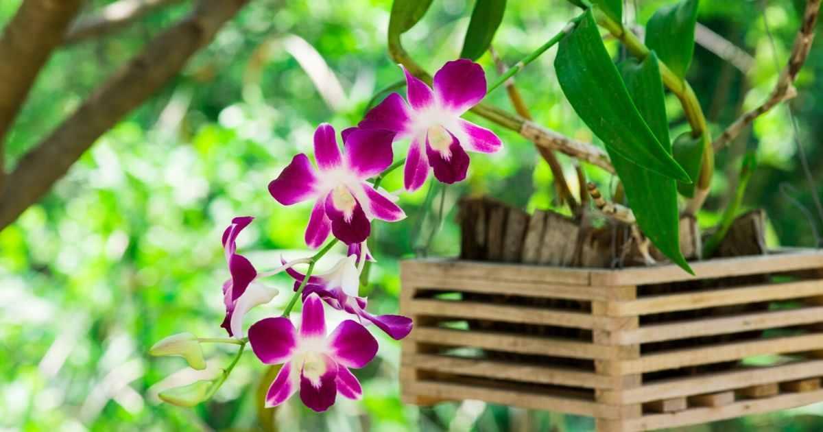 bunga orkid paling cantik